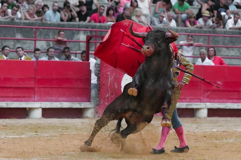 Красная тряпка для быка