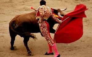 Коррида для быка