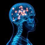 Десять процентов мозга