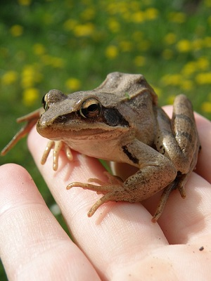 Лягушка на руке