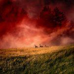 Багровый туман
