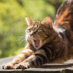 Когда хочется зевать